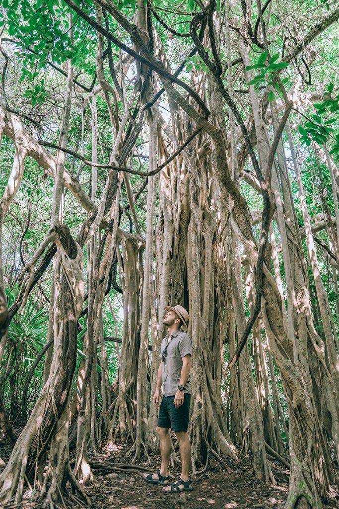 Strefy archeologiczne na Jukatanie: dzungla w Coba