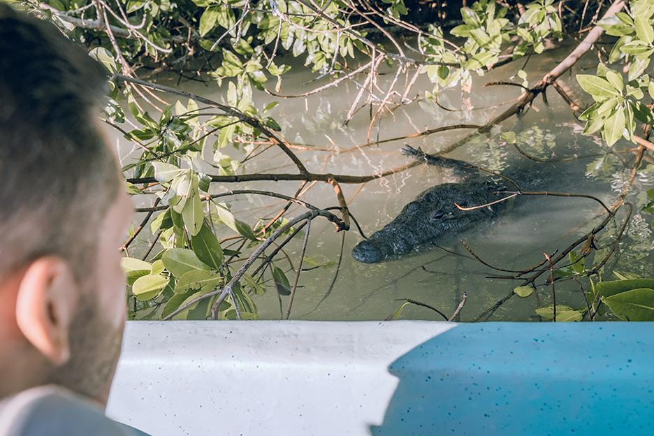 Jukatan, Ría Lagartos: obserwacja krokodyli