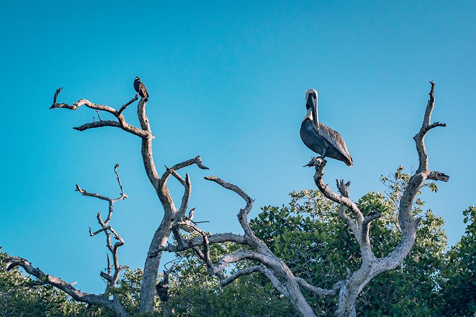 Jukatan, Ría Lagartos: obserwacja ptaków