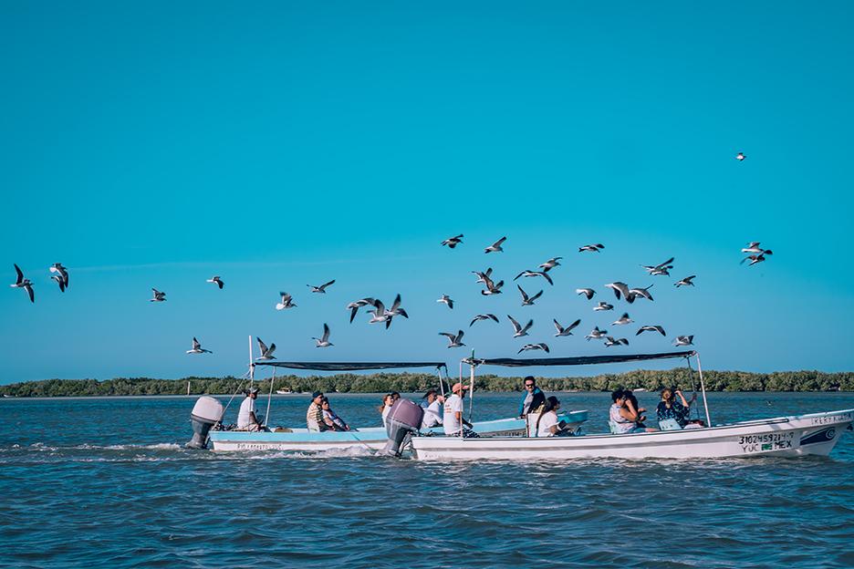 Jukatan, Ría Lagartos: rejs łodzią i ptaki