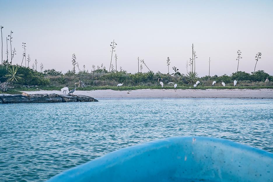 Meksyk, Jukatan: rejs łodzią po Rezerwacie Biosfery Ría Lagartos