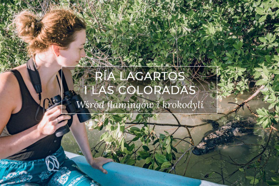 Meksyk Jukatan Ria Lagartos Las Coloradas