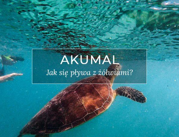 Żółwie w Akumal. Przewodnik.