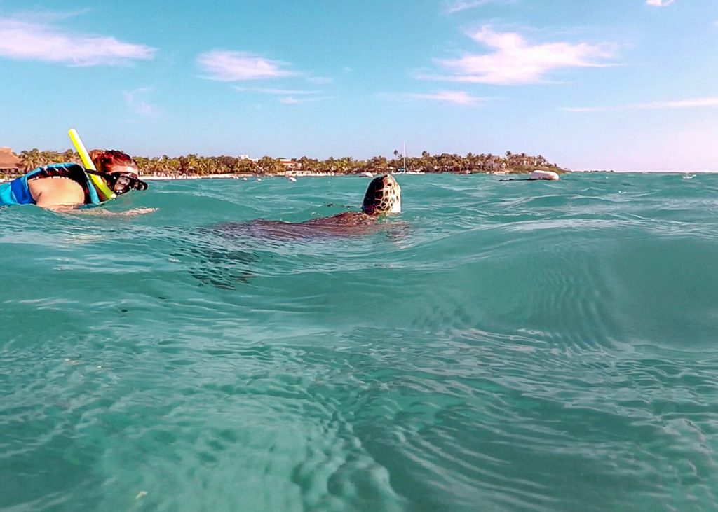 Żółwie w Akumal. Jak zorganizować snorkeling.