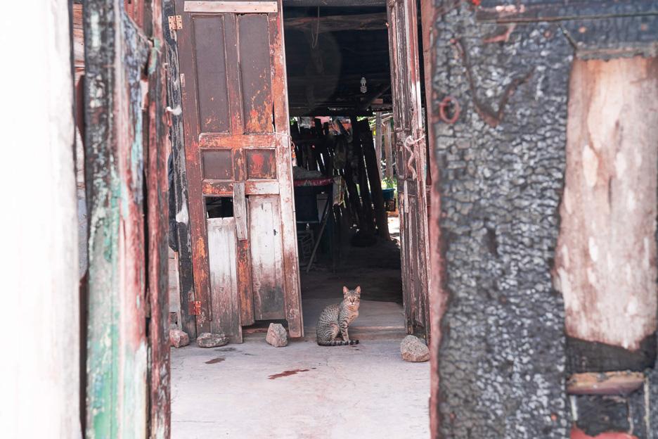 Miasta na Jukatanie, Valladolid, kot na ulicy