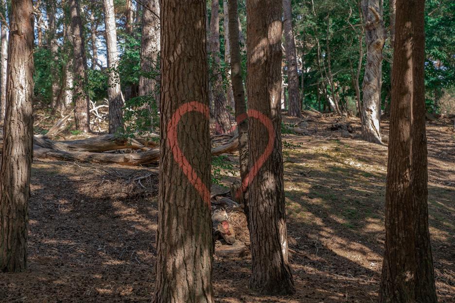 Wielka Brytania, Dorset, las, drzewo z sercem